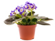 Mini_icon%20houseplants-4254