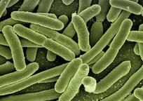 Category_koli_bacteria_123081_960_720