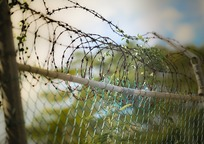 Category_barbed_wire_600471_960_720