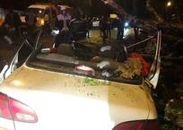 Упавшее дерево придавило мужчину и женщину в машине, фото — «Рекламы Кубани»
