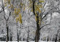 Краснодар засыплет снегом к концу января, фото — «Рекламы Краснодара»