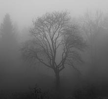 Mini_tree_1031814_960_720