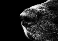 Category_dog_188273_960_720