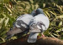 Category_birds_1283524_960_720