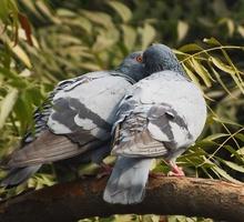 Mini_birds_1283524_960_720