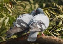 Thumb_birds_1283524_960_720