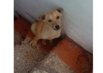 В Севастополе ветеринары ходили мимо примерзшей к лестнице у входа в клинику собаки и только кривились СКРИНШОТ, фото — «Рекламы Севастополя»