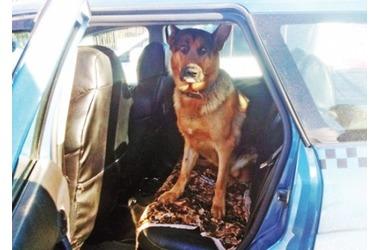 В Севастополе одна собака спасла жизнь другой (фото), фото — «Рекламы Севастополя»