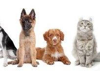 В Севастополе стартовала обязательная регистрация собак и кошек в государственных ветеринарных учреждениях, фото — Рекламы Севастополя
