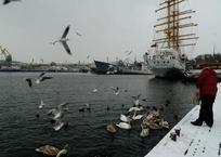 В бухтах Севастополя массово гибнут лебеди. Птичий грипп?, фото — «Рекламы Севастополя»