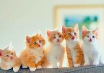 Category_kittens-cats-39057461-1600-900.jpg_qitok_yblxup8w.pagespeed.ce.k7zydaz48l