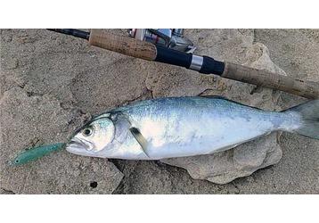Где можно ловить рыбу в Ялте, фото — «Реклама Ялты»