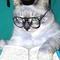 1324664796_wise-cat-1