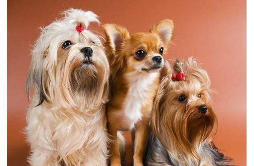 Стрижка собак и кошек в Севастополе, фото — «Реклама Севастополя»
