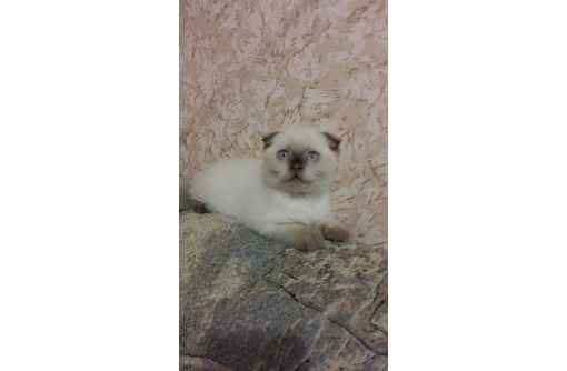 Ну просто замечательный плюшевый котик муркотик, фото — «Реклама Севастополя»