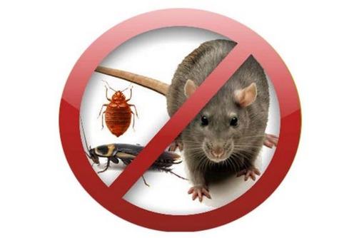 Фирма по уничтожению тараканов и прочих бытовых насекомых в Симферополе, Севастополе, фото — «Реклама Севастополя»