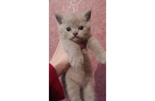 Продам прекрасную плюшевую малышку, фото — «Реклама Севастополя»