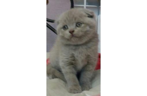 Продам очень красивого плюшевого котенка, фото — «Реклама Севастополя»