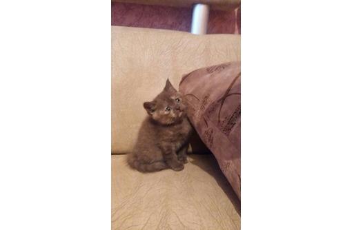 Продам шотландскую кошечку плюшевую, фото — «Реклама Севастополя»
