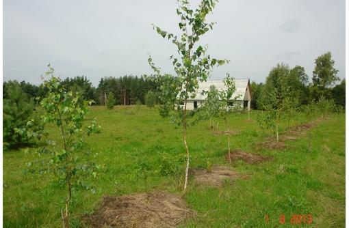 20га земли в 250 км от Москвы (для фермерского хозяйства), фото — «Реклама Алупки»