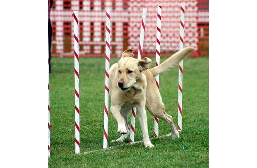 Индивидуальная дрессировка собак, фото — «Реклама Севастополя»