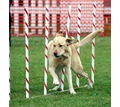 Индивидуальная дрессировка собак - Дрессировка, передержка в Севастополе