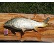 Отдых в Крыму, рыбалка на горном озере, фото — «Реклама Севастополя»