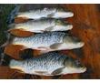 Отдых в горах Крыма, на берегу горного озера, рыбалка., фото — «Реклама Севастополя»