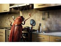 Feature_kuxnya-tarakan-usy-eda-nasekomoe-pishha-pechka-parazit