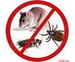 Борьба с грызунами и насекомыми – дезинфекция, дезинсекция, дератизация, последующий контроль, фото — «Реклама Севастополя»