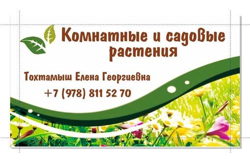 Садовые и комнатные растения., фото — «Реклама Севастополя»