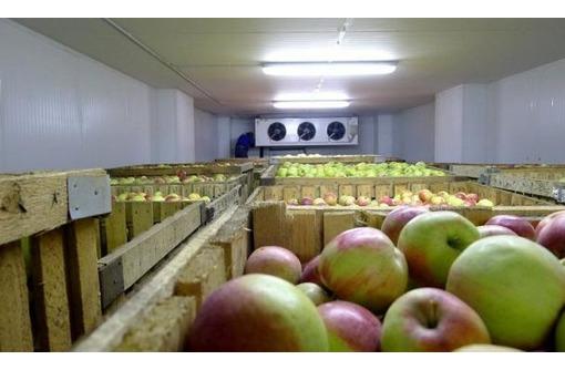Холодильные камеры долгого хранения овощей, фото — «Реклама Симферополя»