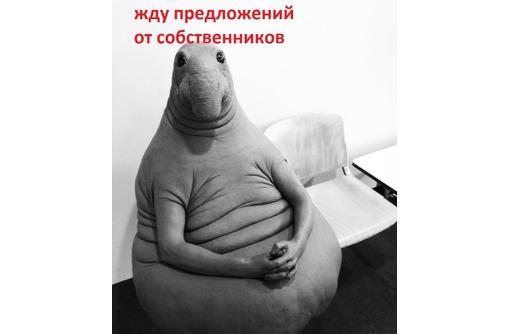 Куплю дачу или участок в садовом товариществе., фото — «Реклама Севастополя»