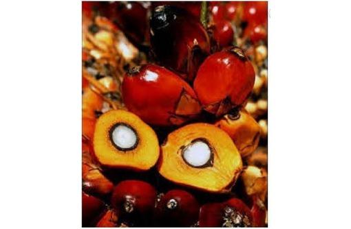 Масло пальмовое водорастворимое, фото — «Реклама Джанкоя»