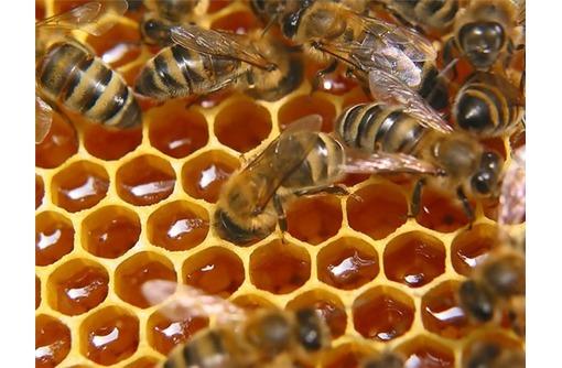 Пчелоинвентарь и всё для пчеловодов. Мед и  Пчелопродукция - для Вас, фото — «Реклама Севастополя»