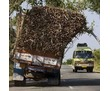 Вывоз сухих веток,травы,колючек.Спил деревьев.Услуги грузчиков.Грузоперевозки.Переезды.Вывоз хлама., фото — «Реклама Севастополя»