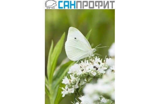 Дезинсекция, уничтожение бытовых насекомых и грызунов, сельхозвредителей в Крыму, агрохимуслуги, фото — «Реклама Севастополя»