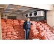 Овощехранилища,камеры длительного хранения овощей.Установка под ключ., фото — «Реклама Старого Крыма»