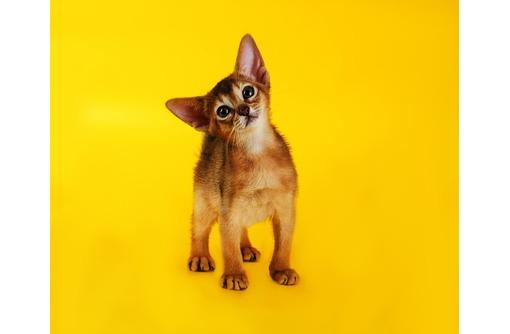 У вас еще нет домашнего когуара - дикой пумы?, фото — «Реклама Севастополя»