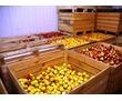 Охладители для Овощей и Фруктов в Крыму. Доставка, Установка, Гарантия., фото — «Реклама Бахчисарая»