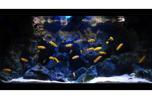 Чистка аквариумов Симферополь,Севастополь, Ялта, Аушта, фото — «Реклама Симферополя»