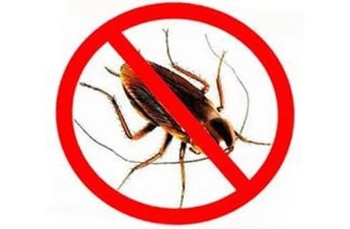 Дезинсекция. Полное выведение тараканов, блох, грызунов, плесени и др., фото — «Реклама Севастополя»