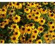 Продам ЮККУ, ХОСТУ, КАМПСИС, ОЧИТОК и др. цветы со своего участка, фото — «Реклама Севастополя»