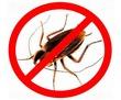 Уничтожение насекомых и грызунов, фото — «Реклама Севастополя»