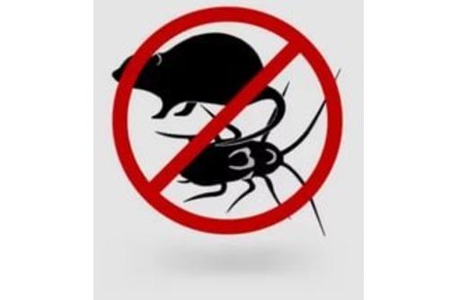 Уничтожение тараканов , грызунов и прочих вредителей в жилых и не жилых помещений, фото — «Реклама Севастополя»