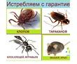 Качественное уничтожение клопов, тараканов, грызунов, блох, плесени и не приятного запаха., фото — «Реклама Севастополя»