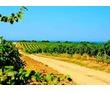 Земли сельскохозяйственного назначения, плодовые сады, виноградники, фото — «Реклама Севастополя»