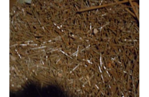 продам гвозди длиной 40 мм, фото — «Реклама Севастополя»