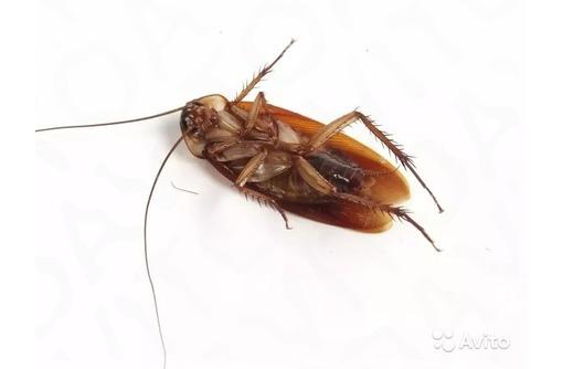 Уничтожение тараканов , грызунов, клопов, фото — «Реклама Севастополя»