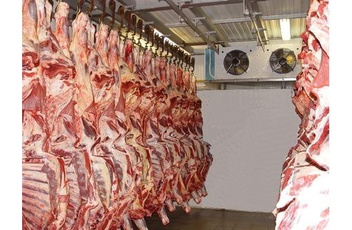 Камера хранения для мяса.Установка,гарантия,сервис., фото — «Реклама Севастополя»